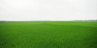 Đánh giá tiềm năng xuất khẩu của sản phẩm nông nghiệp Việt Nam